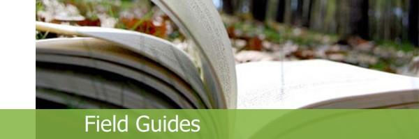 26 – Field Guides_en