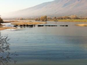 Λίμνη Κερκίνης (1)